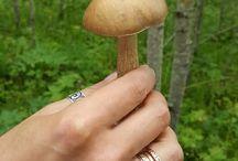 грибы mushrooms
