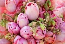 Tulipán szerelem