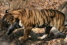 Sunabeda Tiger Reserve in Odisha