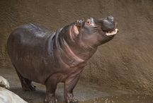 Rainy Days at the L.A. Zoo / Watch our animals frolic and play in the rain.