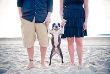 Love @ 1st snort! (Boston Terrier love) / It's a bozzie nation :)