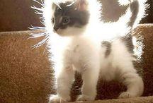 Meow! Meow!