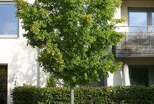 Stromy a keře do zahrad /// Garden trees & shrubs