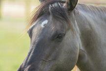 Cavalli & Cowboys