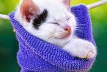 Cute kittens / Kittens