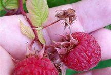 Razzmatazz / Everything Raspberry