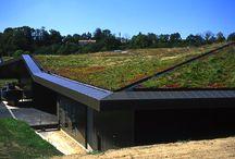 Zöld tetők