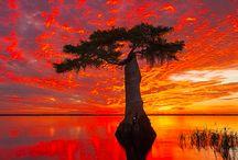 Natur billeder