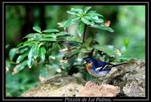 La naturaleza de La Palma  / También conocida como la isla Verde, la naturaleza de La Palma destaca por su gran valor, su belleza y su buen estado de preservación