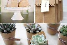 packaging cactus y suculentas