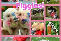 SUPER CUTE ANIMALS (mostly pigs and cats)