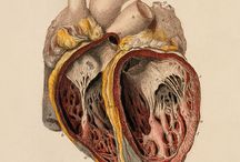 Ref - Anatomy