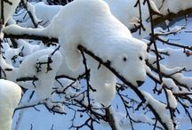 Winter wonders / by Carey Norton