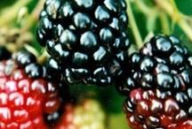 BLACKBERRIES, RASBERRIES / Berries / by Shirley Weston