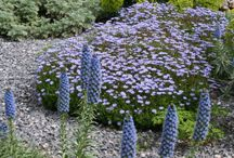 Garden Design / Ideas for our garden