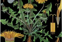 Botanic love