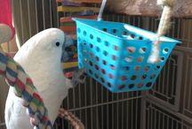 Making bird toys