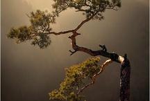 úžasná přírodní bonsai
