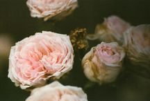 flower / by Lidija