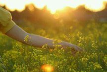 L'été d'or.......