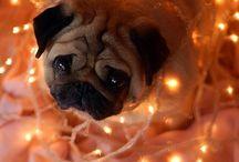 Puppy love stuff ❤️ / by Rhonda Long