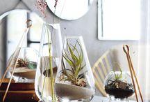 Indoor Garden // Terrarium