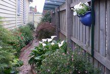 Kat afscherming tuin