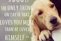 Every bodies best friend / Puppies and dogs