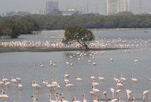 Best of birds of India
