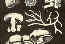Mushroom Literature / A collection of interesting books on mushrooms and mycology