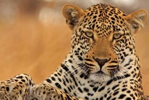 Wildlife Photography / Inspiring Wildlife Pictures