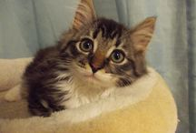 Catdom / Our three babies: Albert, Antonio and Armando :3