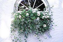 janela-a.serviço/flor/pendente