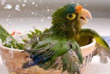 Parrots - Papukaijat