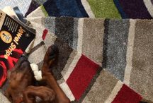 Flooring available / Various flooring available from Tayflor Carpets & Vinyls. Northampton