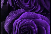 Lilacs and purples