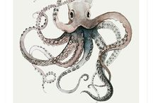 All Things Cephalopod