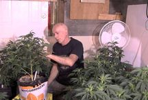 The Medical Marijuana Growers Guide. / Indoor organic cultivation.