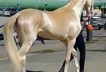 Horses / by Suki L.G.K.