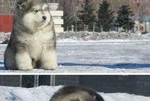 Aww! Cute
