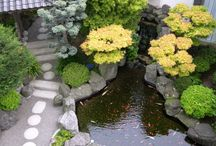 Japanese garden inspirations / Redesigning my garden into a small Japanese garden with Koi pond in honour of my recently deceased mother - best mother in the whole world.
