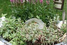 Outdoors + Gardening