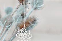 Designing December / Inspiration for the Winter & Holiday Season / by Tyra Babington