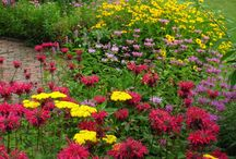 Garden / Home