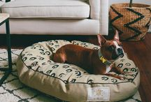 Pet Style by Pottery Barn