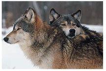 Wolves / by Natasha Kelly