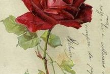 Roses painted