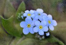 ciçek