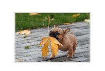 herfst dieren