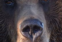 Bears / by Deborah Rieger